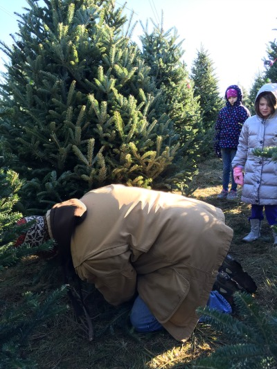 12072014 cutting down our Christmas tree