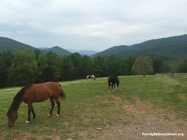 Shenandoah Valley Horse
